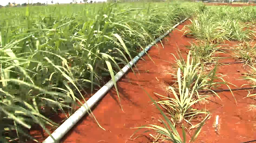 TNA - Industry Ministry to Propose Subsidy for Sugar Cane